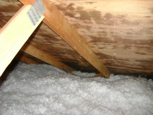 Moldy Attic Small